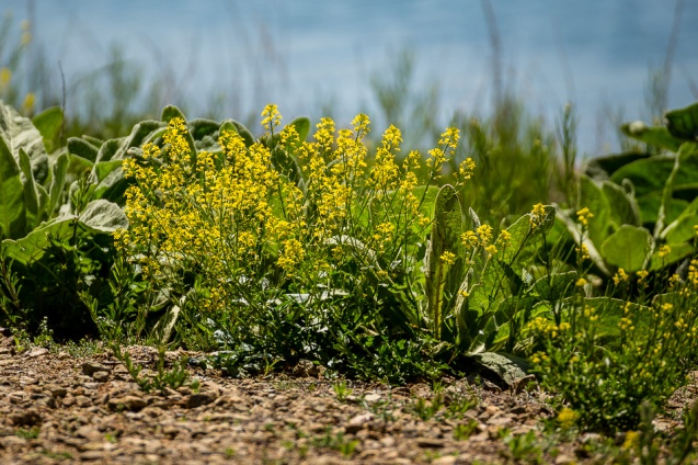 Waterside Wildflowers